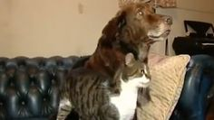 Blind dog gets seeing-eye cat  Terfel was afraid to venture from his bed after losing his eyesight, but a stray cat was willing to lend him a helping paw.