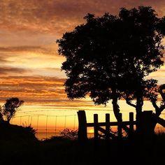Sunset at the old medieval Ruin of Hammershus Castle • Bornholm • Denmark Photo @andreas__engel . . . #hammershus #sky #sonnenuntergang #sunset #tree #ostsee #balticsea #coast #bornholm #brhlm #bornholmferiende #denmark #danmark #dänemark #visitdenmark #visitdanmark #govisitdenmark #traveltodenmark #ilovedenmark #scandinavian #scandinavia #visitscandinavia #scandinaviantravels #visitbornholm #opdagdanmark #aloha_outdoors #neverstopexploring #travelphoto #wanderlust #landscapephotography