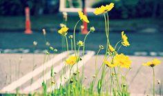 9x Groen het Voorjaar in!