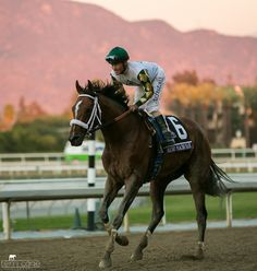 Gary Stevens rides Mucho Macho Man to win the Breeders' Cup Classic. Two days later, he pledged a portion of winnings to Remember Me Rescue. Photo by Terri Cage