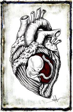 Fetal Heart by ShawnCoss