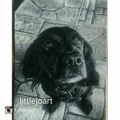 Great work from @littlejoart Commissioned work Bongo the Sprocker Spaniel drawn December 2015 Size A5 pencil and graphite on cartridge paper #drawing #dog #dogdrawing #art #illustration #picture #artist #sketch #sketchbook #paper #pen #pencil #artsy #instaart #beautiful #instagood #gallery #masterpiece #creative #photooftheday #instaartist #graphic #graphics #artoftheday
