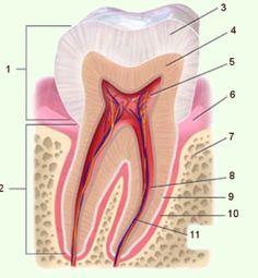 tand zenuw
