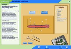 PhET offers virtual science labs in physics, biology, chemistry, and earth science for elementary through high school. Elementary Science, Science Classroom, Science Education, Teaching Science, Elementary Education, Science Labs, Earth Science, Teaching Strategies, Teaching Resources