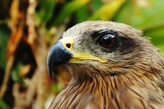Eagle Photo by Abhijit Jadhav -- National Geographic Your Shot