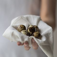 If you have a website, publication or project or are a #designer, #blogger, #publisher or #student you are welcome to use this photo of a #Quail #Eggs in Napkin for absolutely free - for both personal or commercial projects. Head over to scatterjar.com/ to download more high-res free #food photos and to find out more.
