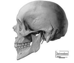 Render Autres/Inconnu - Renders crane humain ossement squelette