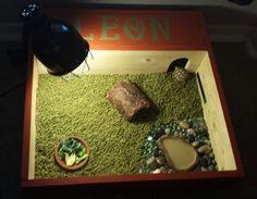 Tortoise table Tortoise habitat