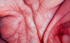 Who: Edie Nadelhaft What: Palm Diptych, Oil on Canvas, 54 x 72 in, Why: I really love the use of colour in this photo to create a piece that is both abstract and photo-realistic, with the palm textures high in detail. Skin Mapping, Close Up Art, Extreme Close Up, Close Up Photography, Hand Photography, Photography Ideas, A Level Art, Hand Art, Gcse Art