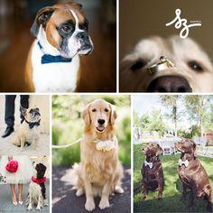 Dogs in Weddings Para todos aquellos compañeros que forman parte de la nueva familia : las mascotas pueden también formar parte de las bodas, preferiblemente en espacios abiertos. En SZ Eventos, recomendamos esta inspiración ya que esta dedicada a todas las parejas que no pueden imaginar su Boda sin sus mascotas en este caso, perros.  www.szeventos.com soizic@szeventos.com