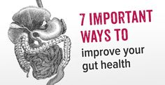 Jenny's Living Space: How to improve your gut health