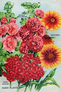 Several antique seed packet designs