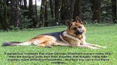 Mistakes German Shepherd Owners Make While Potty Training Puppies