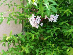 #art #artwork #写真 #photography #アート#my photos  #photo #花 #植物 #flowers #風景 #landscape