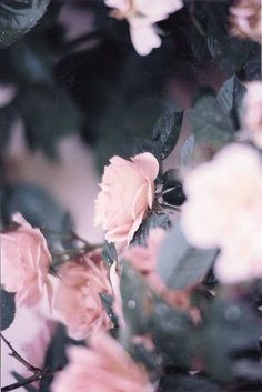 <3 smell the roses <3