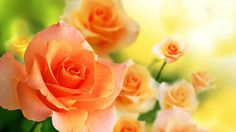 Wallpaper Most Beautiful Orange Rose In The World Hd Images With Flower Colourful High Quality For Pc Full Most Beautiful Flower Wallpaper World Colourful Garden Wallpaper, Bokeh Wallpaper, Nature Wallpaper, Wallpaper Backgrounds, Computer Wallpaper, Phone Wallpapers, Fleur Orange, Rose Orange, Orange Flowers