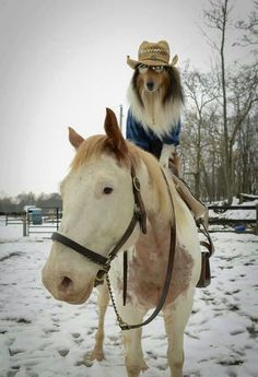 #dogs can ride #horses!!! Can you #believe it?