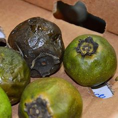 Rose Apples: Exotic Fruits and Vegetables Black Sapote, Chocolate pudding fruit Weird Fruit, Strange Fruit, Fruit Facts, Exotic Food, Exotic Fruit, Tropical Fruits, Green Fruit, Fruit And Veg, Chocolate Pudding Fruit