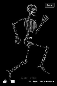 Anatomy :)