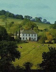 cottage, meadow, sheep: