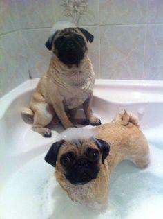 suds n pugs.I need a pug Funny Dogs, Funny Animals, Cute Animals, Cute Pugs, Cute Puppies, Selfie Gato, Amor Pug, Pet Dogs, Dog Cat