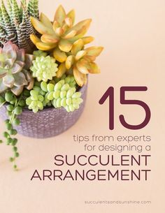 Guest Post: Succulents and Sunshine - Sincerely, Sara D. 15 Expert Tips for Designing a Succulent Arrangement from Succulents and Sunshine Succulents In Containers, Cacti And Succulents, Planting Succulents, Planting Flowers, Growing Succulents, Cactus Plants, Succulent Gardening, Succulent Terrarium, Container Gardening