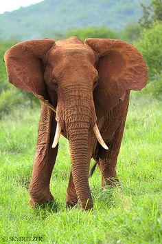 red elephant, via Flickr.  skyfreezer
