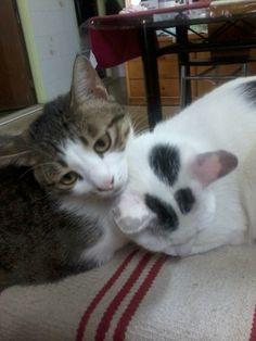 My love cats