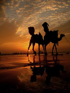 SUNSET Camels _____________________________ Reposted by Dr. Veronica Lee, DNP (Depew/Buffalo, NY, US)