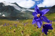 Valle de las Flores, en el Himalaya, los destinos turísticos India
