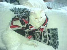 KT was a big Beşiktaş supporter . Green Eyes, Cool Cats, Big, Animals, Animales, Animaux, Animal, Animais