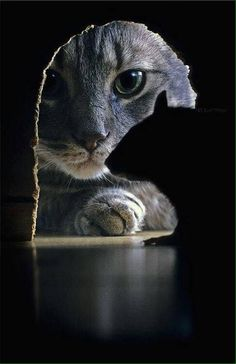 Funniest Animal Pictures : Professional pet photography: 40 wonderful and cute pictures of photogenic cats Animals And Pets, Funny Animals, Cute Animals, Wild Animals, Funny Cats, Farts Funny, Funny Memes, Beautiful Cats, Animals Beautiful