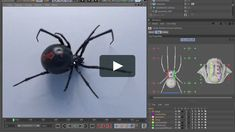 Black widow spider for Cinema on Vimeo Cinema 4d Tutorial, Animation Tutorial, 3d Tutorial, 3d Animation, Motion Design, Mo Design, Graphic Design, Design Web, Cgi