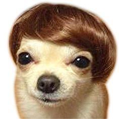 DAYAN Haustier Hund Hohe Temperatur-Draht Perücke Tier-Accessoires Tierkopfbedeckung Brown Bobo DAYAN http://www.amazon.de/dp/B015GVPSBS/ref=cm_sw_r_pi_dp_KsZ3wb108SWHA