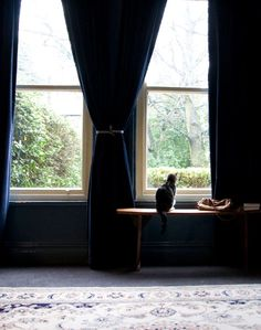 """Sneak Peek: Best of Cats. """"Pip likes to check out the view outside her home in northwest U.K."""" #sneakpeek"""