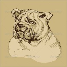 Hand Drawn Vintage Bulldog Head  #GraphicRiver         Bulldog head – hand drawn -sketch in vintage style. This image is a vector illustration and can be scaled to any size without loss of resolution. All parts of the image are editable. EPS file included.     Created: 19October13 GraphicsFilesIncluded: VectorEPS Layered: No MinimumAdobeCSVersion: CS Tags: animal #background #brown #buldog #cartoon #cute #design #dog #doggy #domestic #drawing #face #front #fur #grunge #handdrawn #handdrawn…