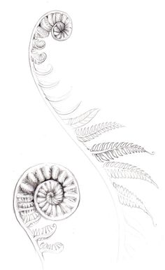 fern tattoos - Google Search More