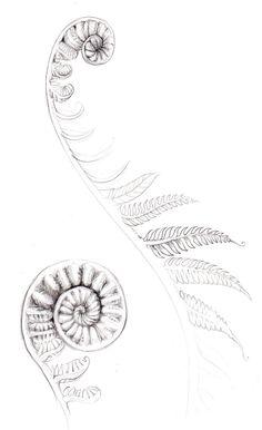fern tattoos - Google Search