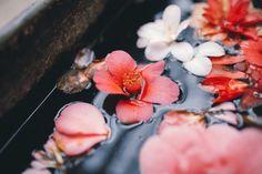 Imagem de flowers and water
