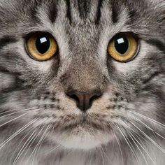 Cica...