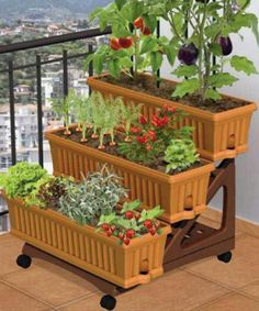 Small space garden... I should make this so I can move the herbs in for the winter