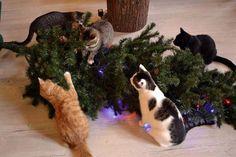 Kitties Helping with the Christmas Tree