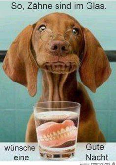 lustiges Bild 'Zähne sind im Glas.jpg'- Eine von 24818 Dateien in der Kategorie 'witzige Bilder' auf FUNPOT.