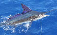 Dream Maker Fishing Charters, Cabo San Lucas