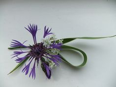 Gentleman's buttonhole - perennial cornflower, Queen Anne's lace and gardeners garters