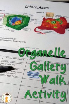 This is a great DIFFERENTIATED way to ensure that students learn the names, functions, and visual recognition of each organelle, while making that lesson less dry, and more engaging. They can be up and moving, and stay active. This is an alternative to giving notes, which can be difficult for students to maintain focus and retain information. Students can work more quickly through those organelles which they already know, and spend more time or ask questions where they individually need to.