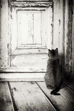 Cat on the wrong side of a door.