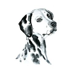 Dog watercolor painting art print Dalmatian by MundoMeo on Etsy . Watercolor Canvas, Watercolor Animals, Watercolor Paintings, Watercolor Portraits, Watercolors, Watercolor Trees, Watercolor Landscape, Abstract Paintings, Custom Dog Portraits
