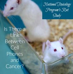 Find out what the U.S. Government says about cell phones and cancer following the release of a landmark study.