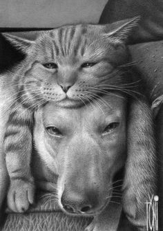 Cat Hat~♛